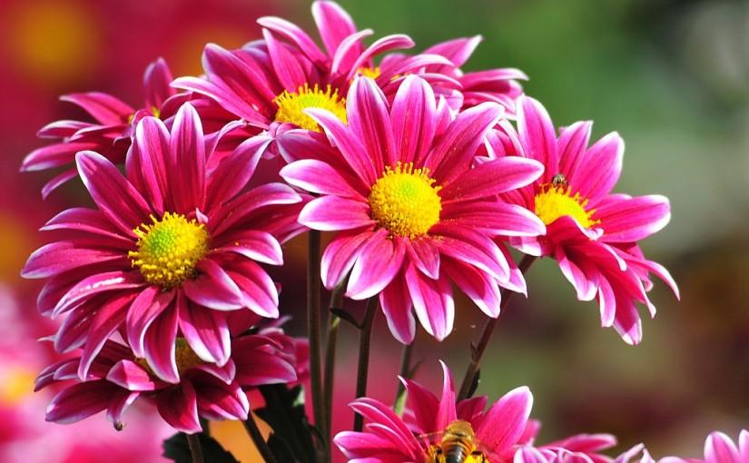 El boom de la venta de flores en Internet